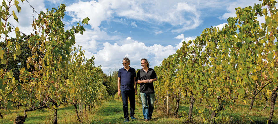 Bocelli Family Wines